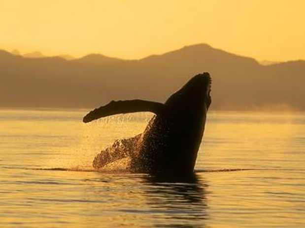 Puerto Vallarta: Eco turism   Eoturismo