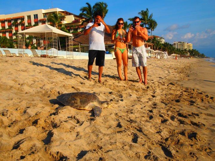 Liberacion de tortugas golfinas