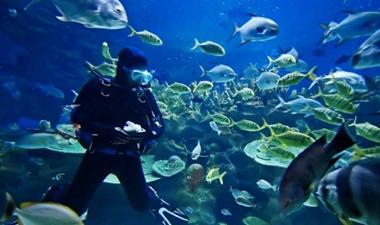the Scuba Diving