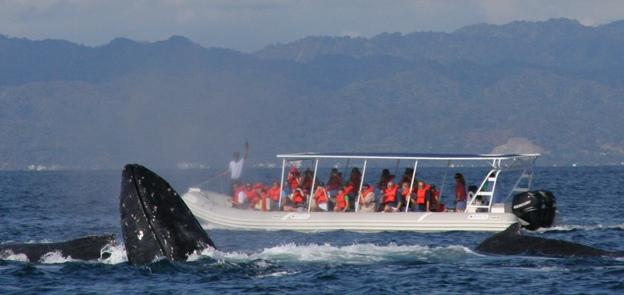avistamiento de ballenas en vallarta nayarit