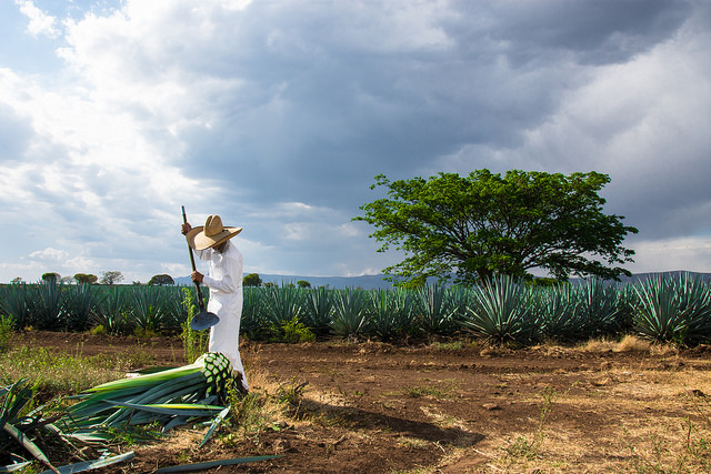 tequila-jalisco-vallarta-travel-blog