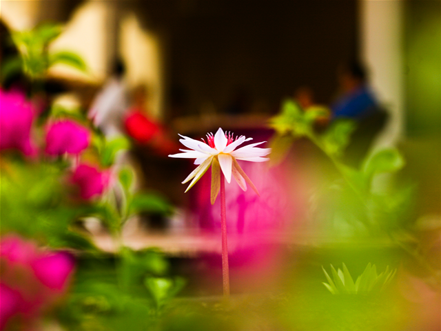 flower-artificial-pond