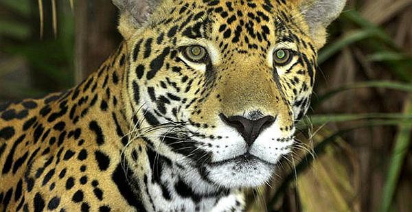 puerto-vallarta-zoo