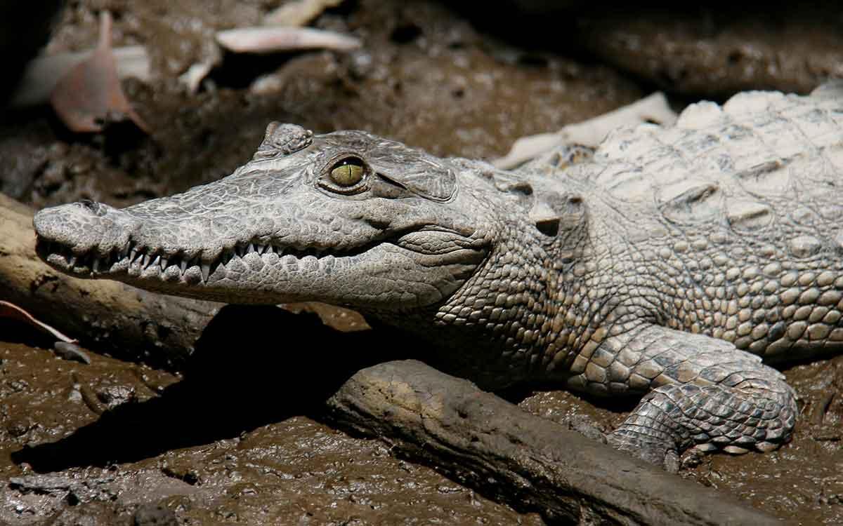 10 animales salvajes que merodean en Puerto Vallarta