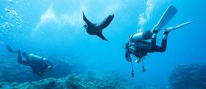 Aquaman Puerto Vallarta