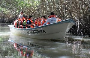Puerto Vallarta Estuary Mangrove & Rain Forest River Tours