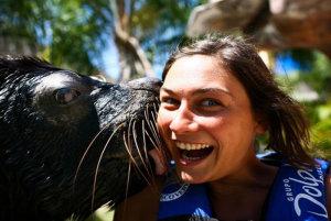 Puerto Vallarta Sea Lions Are Among the Friendliest in the World