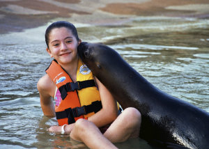 Puerto Vallarta Sea Lions Are Among the Friendliest in the World