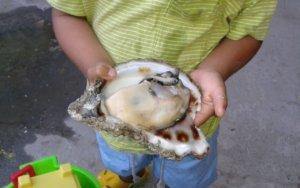 Oyster Festival, Bucerias