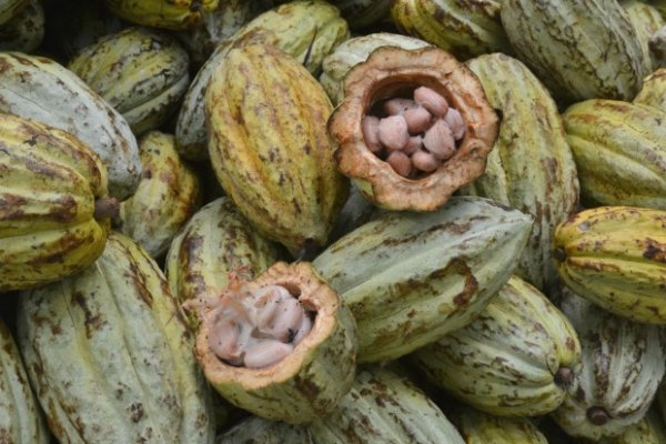 The Origin of Cocoa and a Delicious Recipe to Enjoy