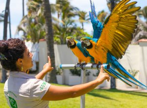 Wildlife Adventure at Grand Velas Riviera Nayarit