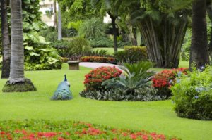 The majestic peacocks at Velas Vallarta
