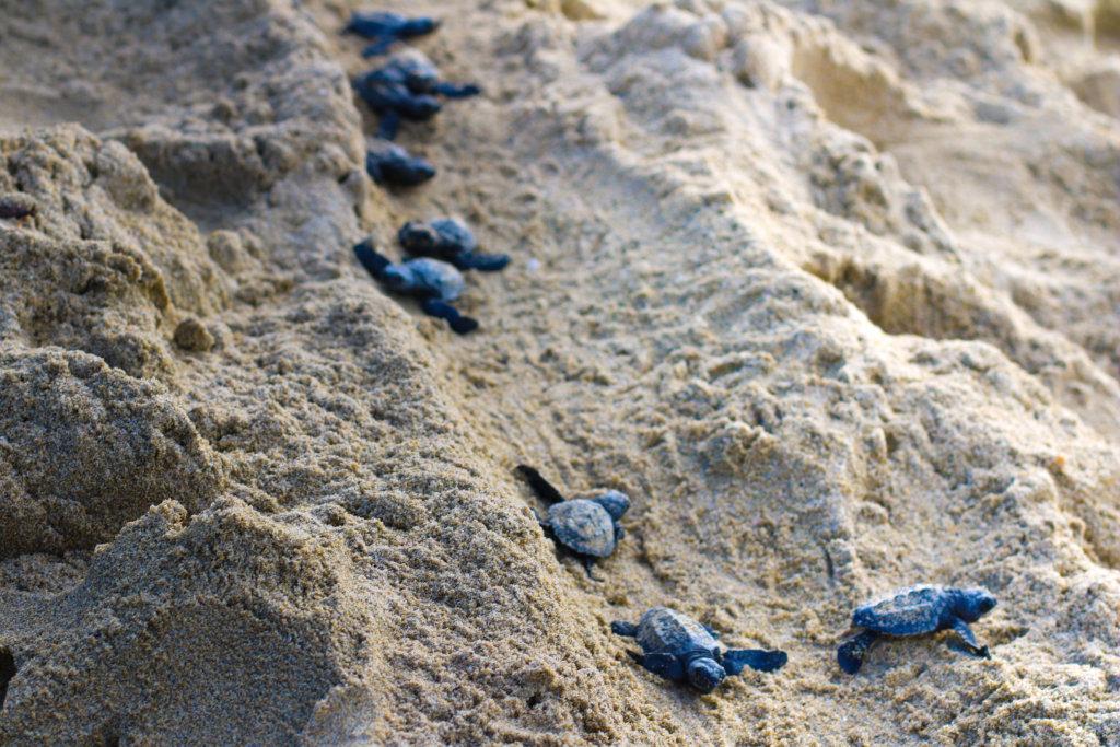 puerto-vallarta-2018-tortugas-golfinas