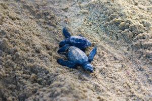 puerto-vallarta-tortugas-golfinas