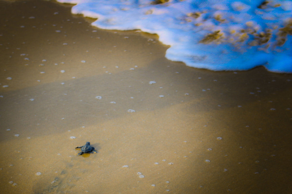 turtles-golfinas-puerto-vallarta-2018