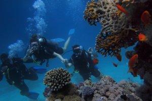 dos personas buceando en un arrecife marino