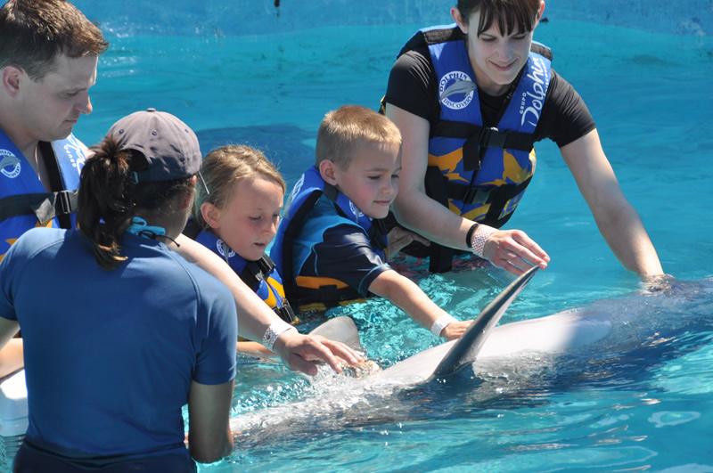 familia nadando con delfines en el parque acuático Aquaventuras de Dolphin Discovery en Puerto Vallarta